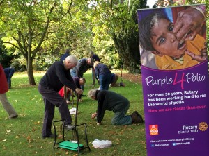 Planting crocuses in Albert Park